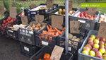 Jabłko i pomidor – eksportowy znak rozpoznawczy polskiego sadownictwa i warzywnictwa